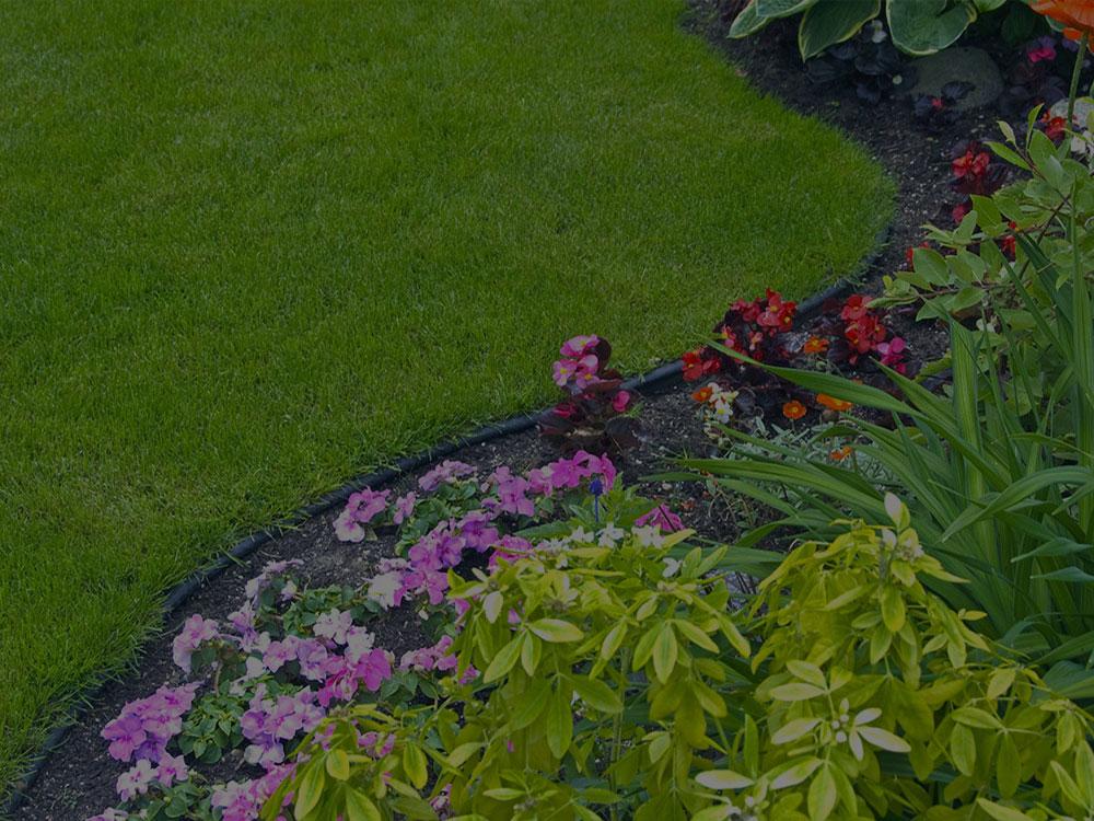 Davis Garden Design