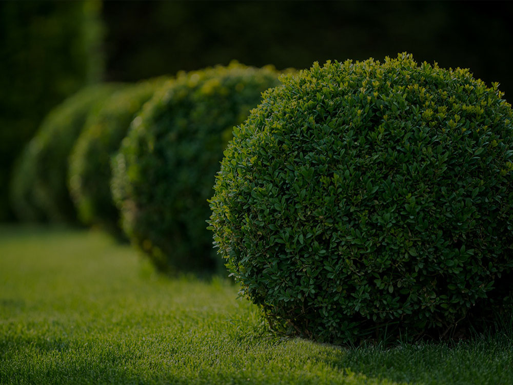 Woodland Landscaping