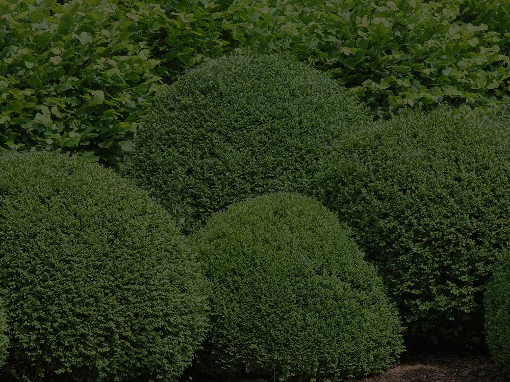 Sacramento Shrubs and Hedges